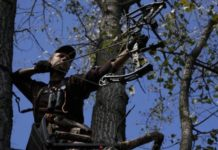 Black Friday Deals on Tree Stands